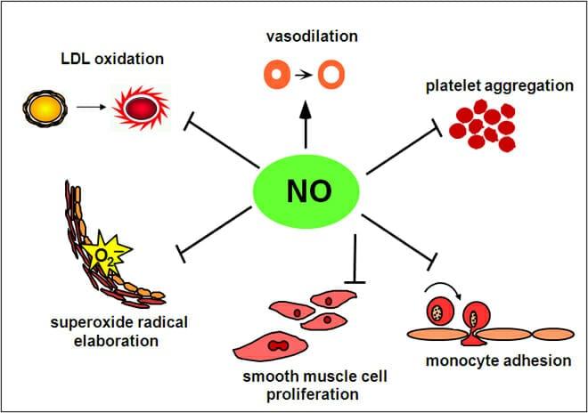 Nitric oxide benefits