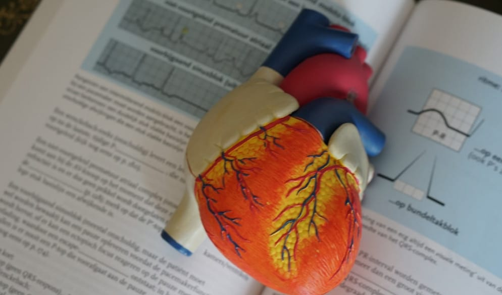 Best blood pressure supplement